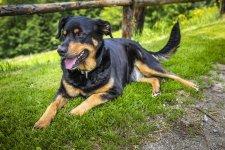 Hund Sina